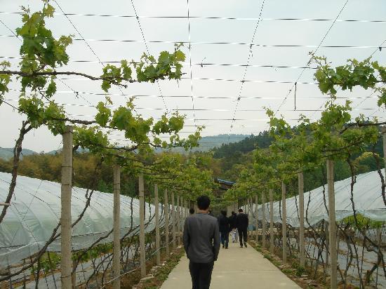 Wangshan Farm: 3
