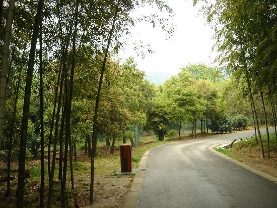 Wangshan Farm: 2
