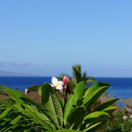 Maui Garden Oasis: 无敌海景