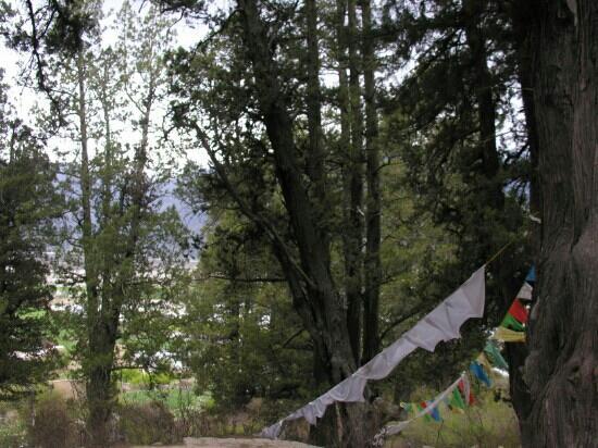 Giant Cypress Nature Reserve of Bajie, Nyingchi: 参天的大柏树