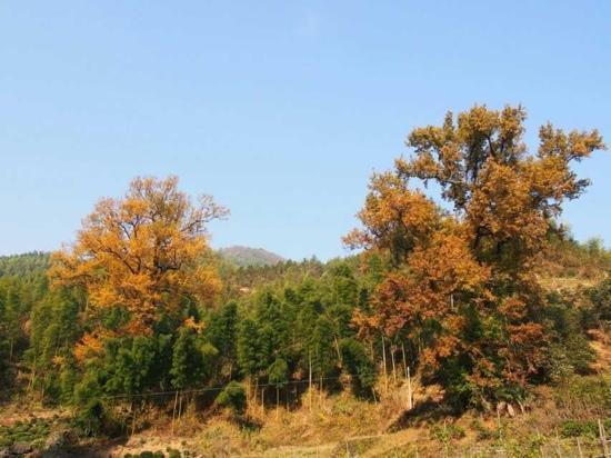 Hunan Forest Botanical Garden : 植物园