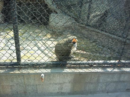 Shenyang Zoo : 2