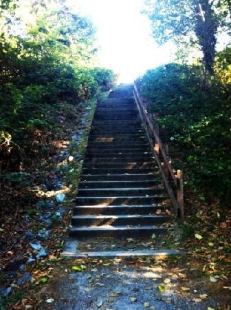 Loquat Hill Park