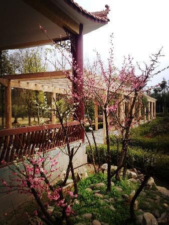Pingye Garden Hotel: 晒晒太阳,荡荡秋千