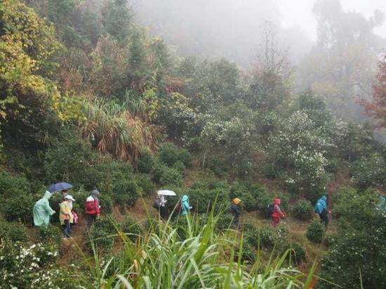 Chongqing Hei Mountain : 黑山