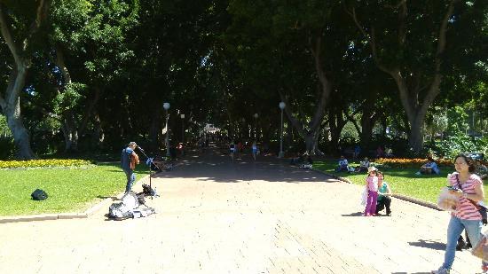 Hyde Park: 弹唱的老外和林荫道