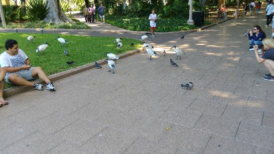 Hyde Park: 公园里的鸟