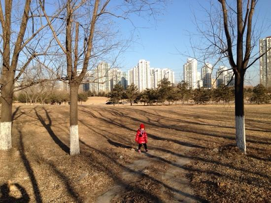 Olympic Forest Park : 难得一个大蓝天,带着闺女逛森林公园