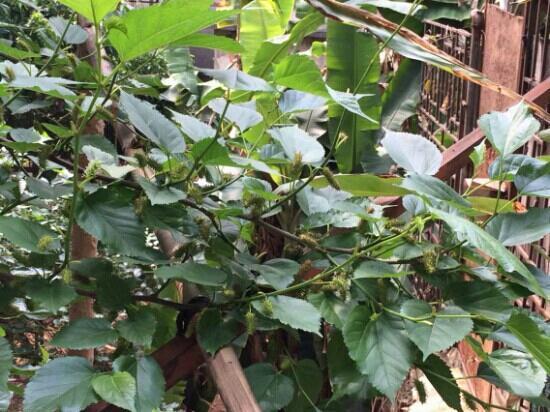 Botanic Garden Ubud: 植物园