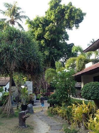 Phi Phi Banyan Villa: da榕树
