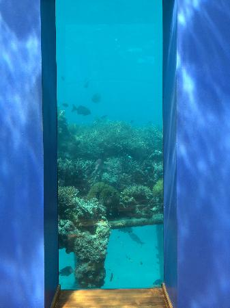 Conrad Maldives Rangali Island : 海底餐廳