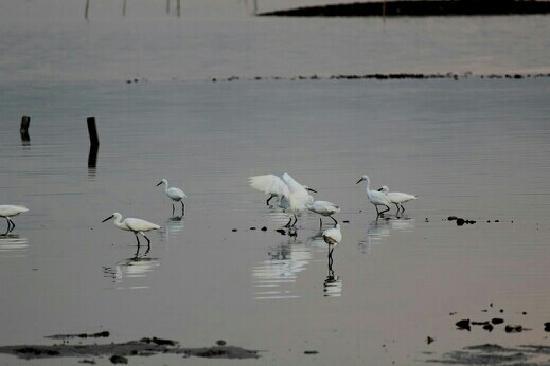 Shenzhen Mangrove Nature Reserve: 湿地水鸟