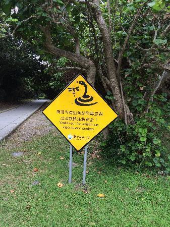 Kenting National Park : 蛇出没