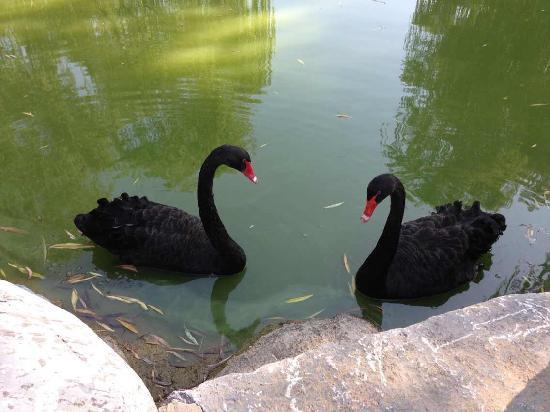 Beijing Conference Center: 北京会议中心的黑天鹅,这是八月底开会拍的。