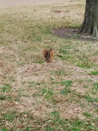 Rice University Campus: 校园松鼠