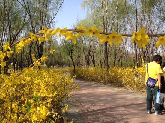 Olympic Forest Park : 花都开了