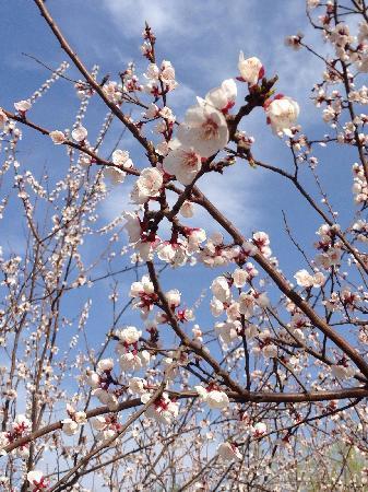 Chaoyang Park : 朝阳公园的春天来了。