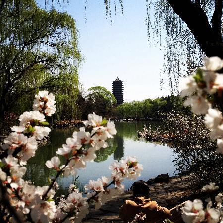 Peking University (Beijing Da Xue): 北大博雅塔和未名湖