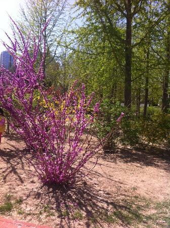 Chaoyang Park : 花儿都开了