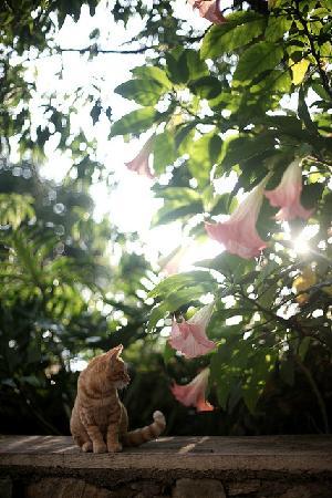 Dali Windoo Resort: 花园里的曼陀罗和猫