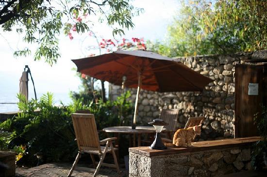 Dali Windoo Resort : 坐在这儿吃了个早饭