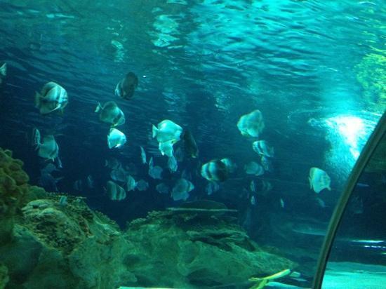 ... di Beijing Gongti Richina Underwater World(Blue Zoo Beijing), Pechino