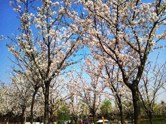 Gucun Garden: 顾村公园