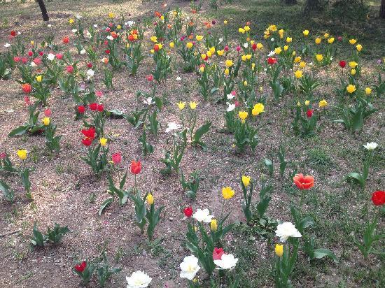 Beijing Botanical Garden : 郁金香