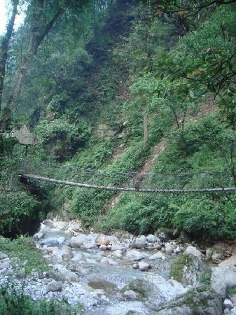 Mt. Emei Natural Ecology Monkey Reserve : 峨眉山猴区
