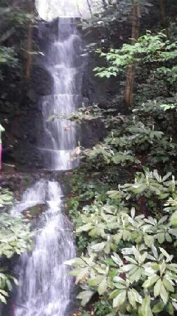 Jiuxi 18 Stream: 瀑布