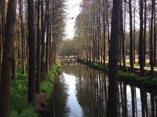Xinghua, China: 水声鸟语、绿树红花、人少的时候游览最好!
