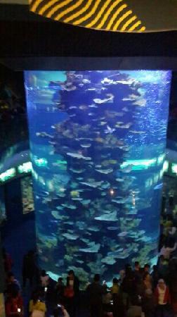 Qingdao Underwater World: 小鱼