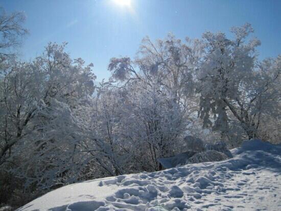 Xiling Snow Mountain Scenic Resort: 西岭雪山美丽的树挂