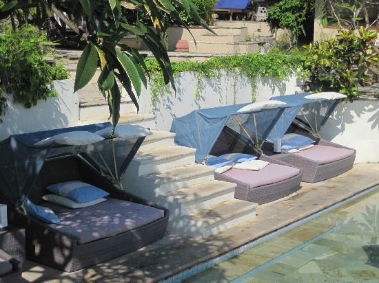 Coconuts Beach Resort : 泳池