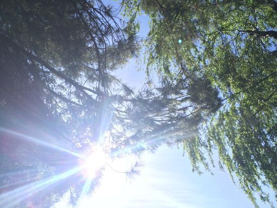 Carbon Canyon Park: lens flare