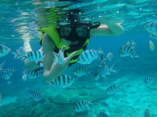 Gipsy Divers: 我跟鱼鱼的亲密照!