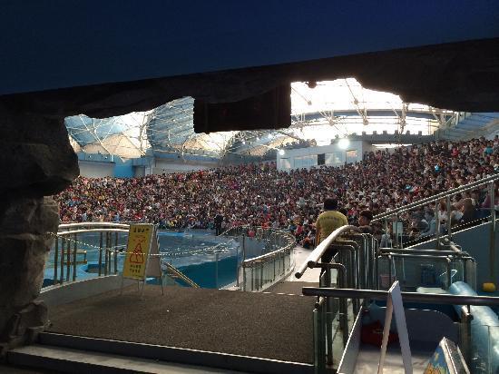 Ji Di Guan - Pole Aquarium.: 海豚表演馆