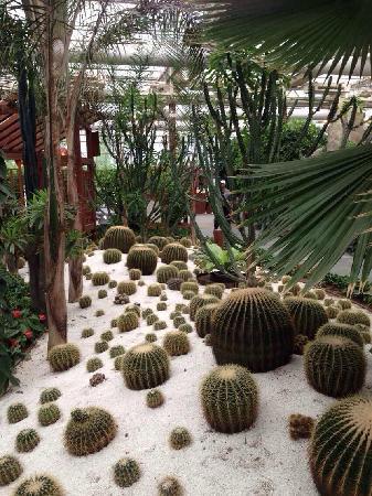 Nan'gong Onsen Resort: 沙漠植物景区