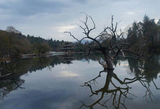 Black Dragon Pond Park: 夜幕下的丽江黑龙潭公园