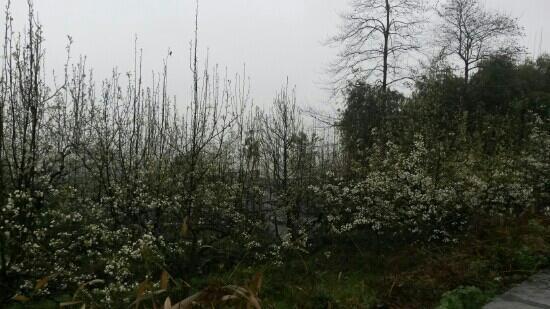 Deyang Yunhu Forest Park