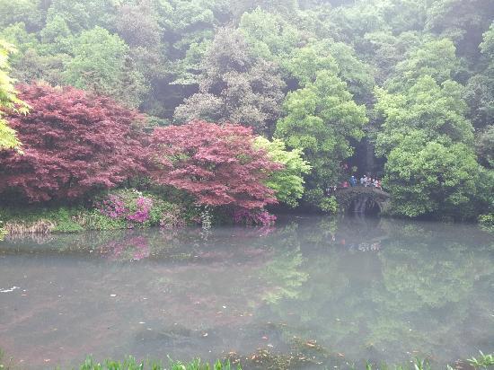 Jiuxi 18 Stream: 九溪烟树