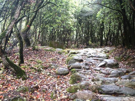 Xichang Lingshan Temple : 灵山的古径,走在铺满落叶的路上的那种放松感特别爽