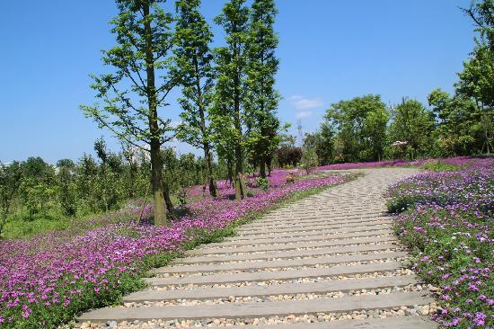 Suining Hedong Wetland Park