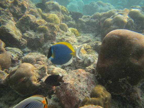 KIHAAD Maldives: 客运码头海底