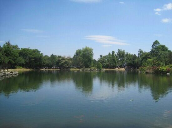 Green Lake (Cui Hu): 翠湖是昆明市中心的景点