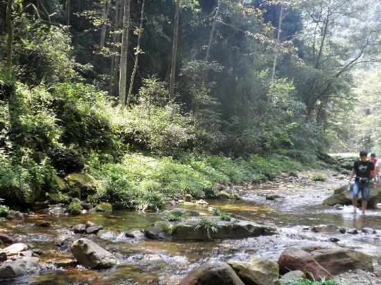 Golden Whip Brook: 金鞭溪