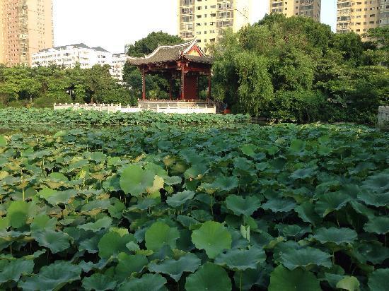 Fuzhou Chating Park: 茶亭公园