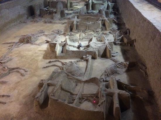 Emperor Carriage Museum : 墓穴陪葬品