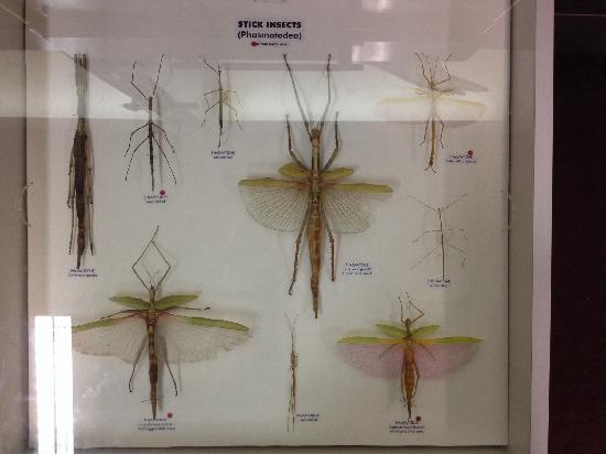 Western Australian Museum - Perth : 标本