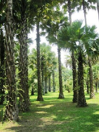 Xishuangbanna Rainforest: 雨林谷里的参天大树